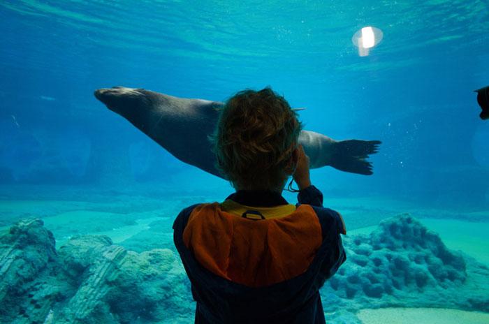 Afrykarium-Oceanarium na terenie ZOO Wrocław. Autorzy: ArC2 Fabryka Projektowa